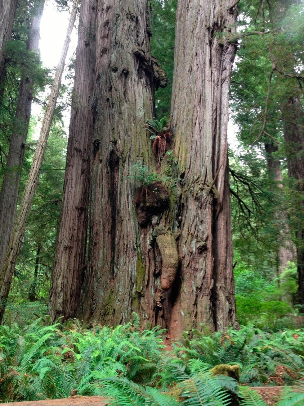 Un gigantesco y majestuoso árbol