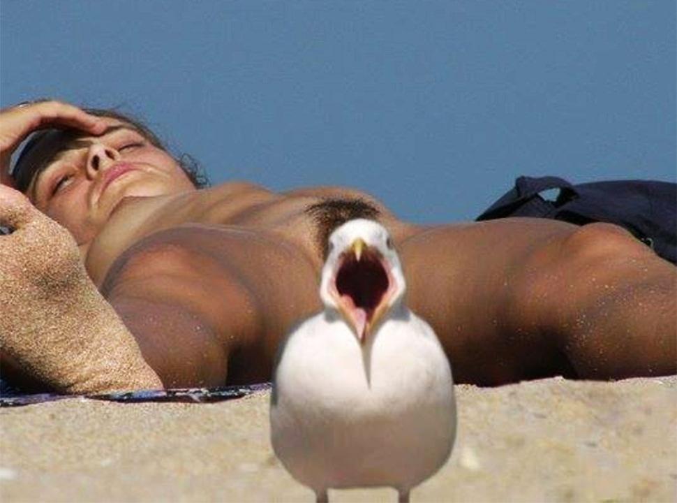 Un pájaro de mal agüero
