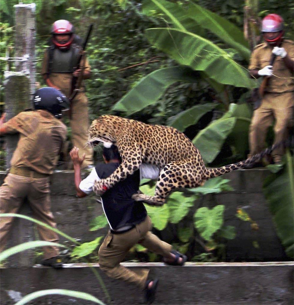 El espectacular ataque de un leopardo