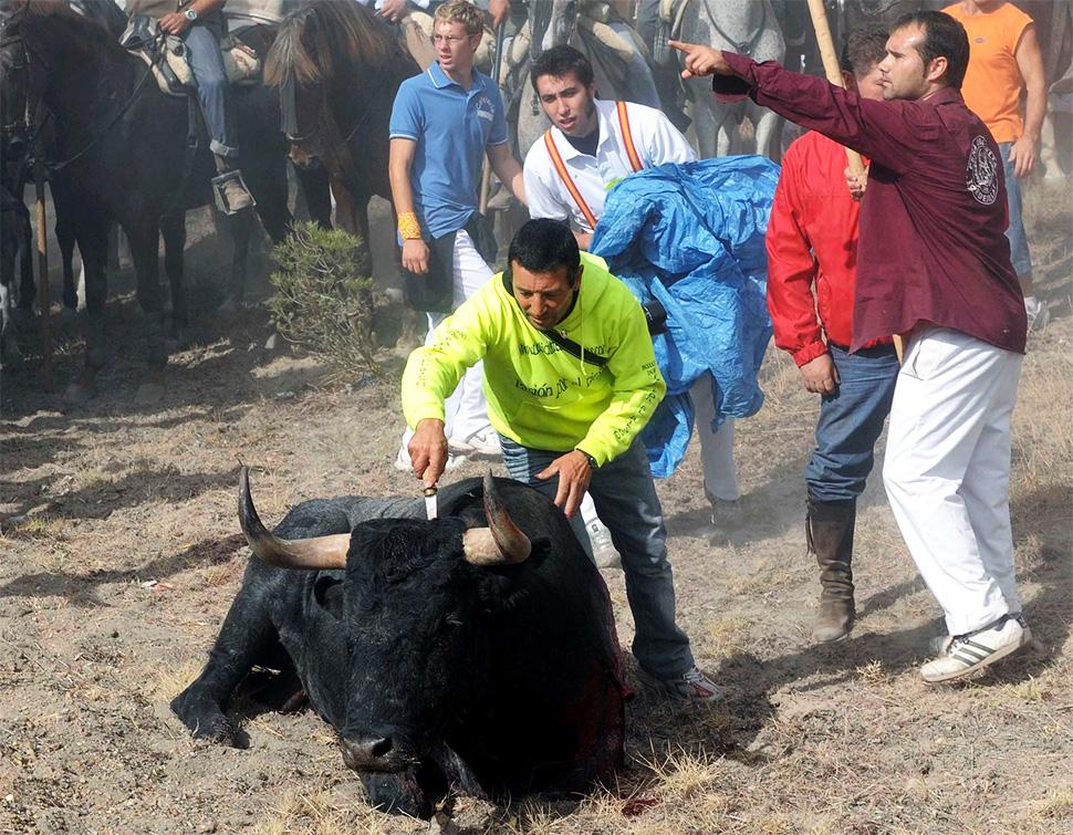 La barbarie vuelve a Tordesillas