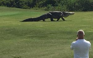 El golf ya es deporte de riesgo en Florida