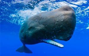 Un hombre llamado ballena
