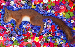 Maria Lonova Gribina dignifica con belleza a animales muertos