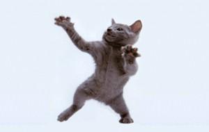 Bailando con gatos… muertos