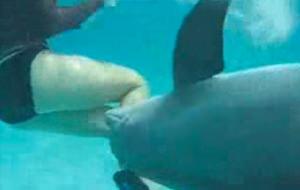 interracial porm delfin