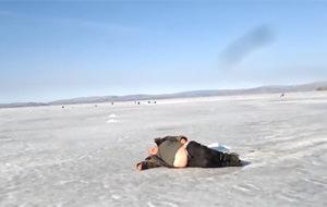 Descubren nueva especie de foca siberiana