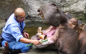 Es la hora de la higiene dental