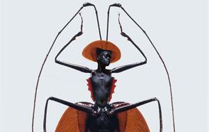 Las insectas de Laurent Seroussi