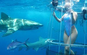 El erotismo entre tiburones de Molly Cavalli