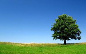 Dendrofilia o el hombre que follaba con árboles
