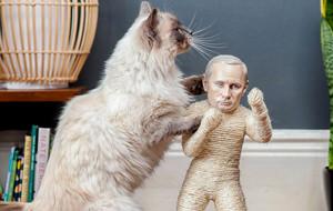 The Pussycat Riot: gatos contra la censura