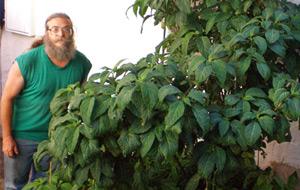 Primeras experiencias con Salvia Divinorum