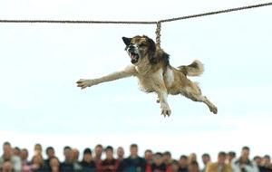 El perro, ¿el mejor amigo del hombre? (Bulgaria)