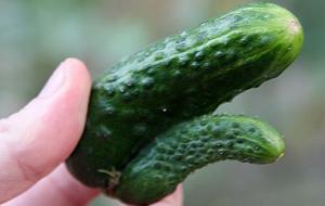 Vegetales orgasmátricos